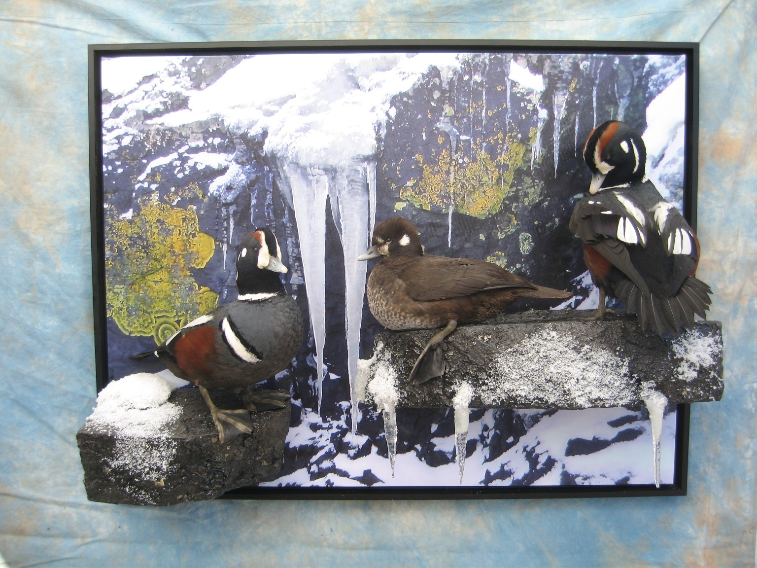 Hunter - Taxidermist for taxidermy and mounting